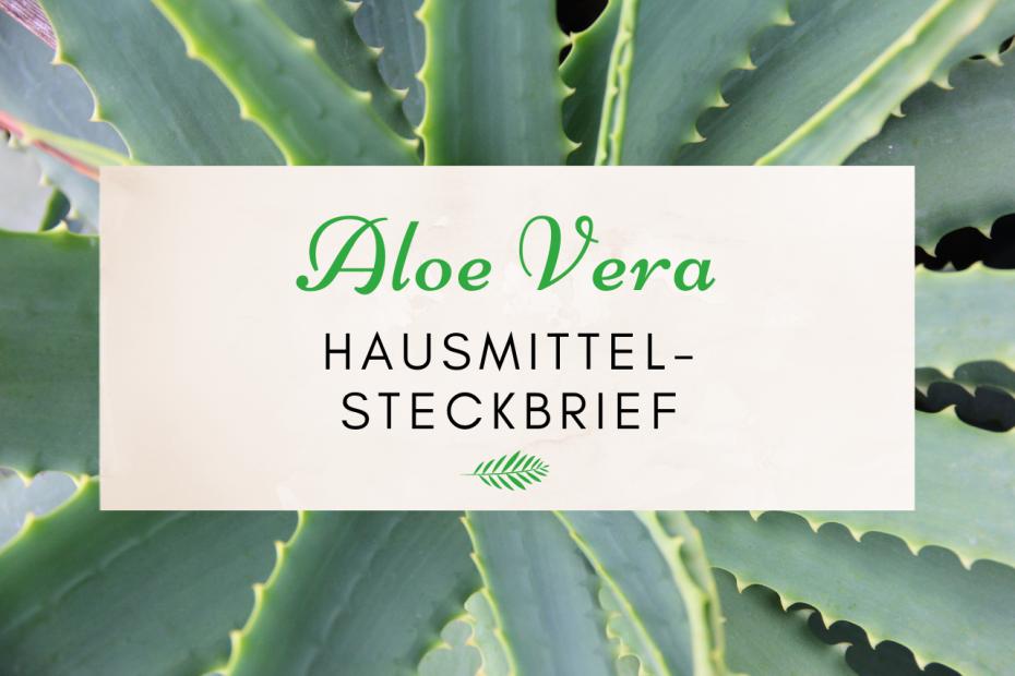 Das Bild zeigt die Aloe Vera Pflanze.