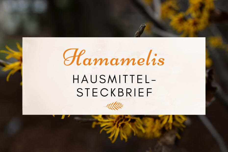 Das Bild zeigt Blüten des Hamamelis-Strauchs.