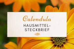 Riesige Calendula bzw. Ringelblumenblüte